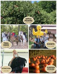 Pumpkin Picking Near Lancaster Pa by Stowe Farm Apple Picking Horse Riding Pet Boarding And More