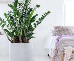 pflanzen im schlafzimmer ziemlich pflanzen im schlafzimmer