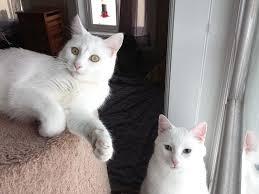 popular cat names die besten 25 most popular cat names ideen auf katzen