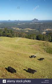 100 Maleny House View Over Cows Farmland And Glass Mountains From