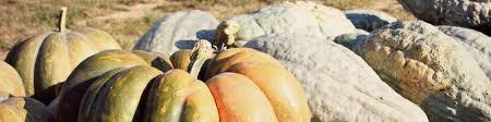 Woodside Pumpkin Festival by Pumpkin Patches Of The Eastern Shore Md U0026 De Shorebread