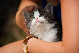 signs of worms in cats how to recognize and treat worms in your kitten or cat