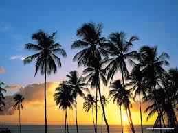 Beach 1 2 3 Palm Trees