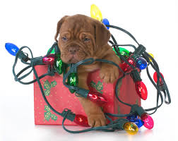 Are Christmas Trees Poisonous To Dogs Uk by 6 Times Holiday Decorations Turned Into Disasters