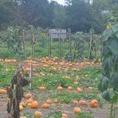Pumpkin Patches Near Chico California by Peterson U0027s Farm 13 Photos Fruits U0026 Veggies 636 Gossage Ave