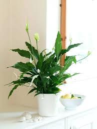 Low Light Plants Low Light Indoor Plant List Plants Need Light To