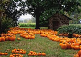 Norms Pumpkin Patch 2015 by Halloween Good Earth Plant Company U0027s Favorite Biophilic Holiday