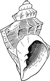 Seashell 2