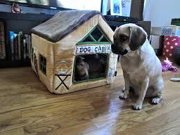 dog cabin stella the puggle
