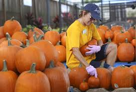 Pumpkin Patch Church Tallahassee by Pumpkin Patch Will Benefit Humane Society Of Tampa Bay