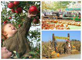 Pumpkin Picking In Chester Nj by Mom On Monday Fun Fall Activities U2014 Work It Out