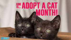 adopt a cat adopt a cat month pointers petcha
