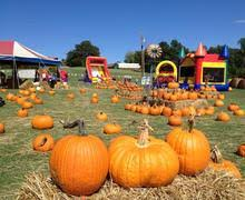 Closest Pumpkin Patch To Yankton Sd by Riverview Christmas Tree Farm Christmas Trees Pumpkins