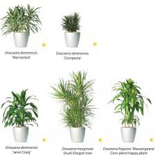 Good Plants For Bathroom by 28 Best Plants For Bathroom Nz Living Wall Renovate 1000