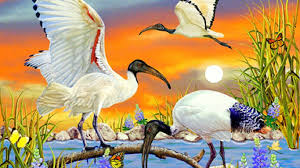 Colors Attractions Seasons Four Birds Summer Moons Creativer Butterfly Bright Butterflies Dreams Paintings Animals Sacred Lovely Designs Ibis Beautiful