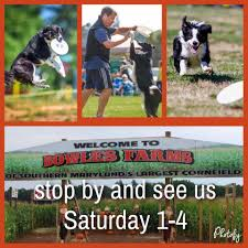 Boone Hall Pumpkin Patch And Corn Maze by Bowles Farms Corn Maze Home Facebook
