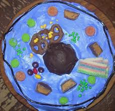 Animal Cell Model Cake – Eclectic Homeschooling
