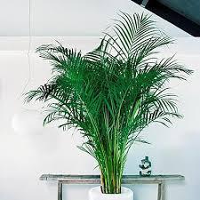 plantes vertes d interieur plante verte tropicale d intérieur florideeo