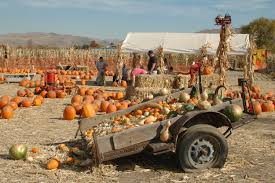 Underwood Farms Pumpkin Patch Hours by Halloween Pumpkin Patches And Corn Mazes Around Reno And Tahoe