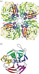 Asymptomatic Viral Shedding Influenza by Anti Viral Adhesion For Influenza Philosophical Transactions Of