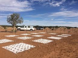 100 Seedling Truck RestoreNet Garden Testing Seedling Establishment