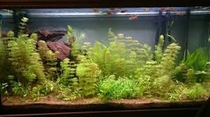 démarrer un aquarium de 60l
