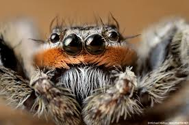 Spirit Halloween Jumping Spider by Charlotte U0027s Web 2006 Review By Jimenopolix On Deviantart