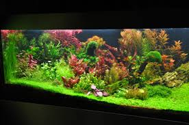 Planted Tank Colorful Forest By Dumitrescu Andrei - Aquarium ... Aquascape Of The Month June 2015 Himalayan Forest Aquascaping Interesting Driftwood Placement Aquascapes Pinterest About The Greener Side Aquascaping Design Checklist Planted Tank Forum Simons Blog Decoration Bring Nature Inside Home Ideas Downhill By Arie Raditya Aquarium 258232 Aquaria Creating With Earth Water Fire Air Space New Aquascapemarch 13 2016page 14 Page 8 Aquapetzcom Magical Youtube 386 Best Tank Images On Aquascape