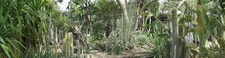 Tool Shed Bar Palm Springs Ca by Moorten Botanical Garden Museum Palm Springs Reviews Ellgeebe
