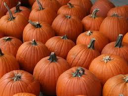 Pumpkin Patch Auburn Al by Best Pumpkin Patches And Cider Mills In Metro Detroit Rochester
