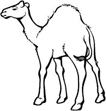 Camel Preschool Coloring Pages Zoo Animals Animal