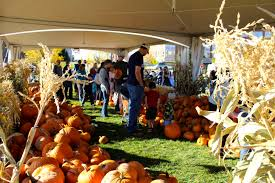 Chatfield Pumpkin Patch Hours by These Are The 5 Best Pumpkin Patches In Colorado The Denver City