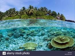 100 Kuramathi Island Maldives Indian Ocean Stock Photo