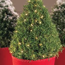 Itwinkle Christmas Tree Troubleshooting by Rosemary Christmas Trees Christmas Lights Decoration