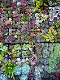Wall Garden Of Succulents Living