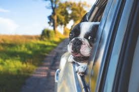 Dog Ramps For Cars - The Best Pet Ramps UK 2018 - Deals + Reviews Inexpensive Doggie Ramp With Pictures Best Dog Steps And Ramps Reviews Top Care Dogs Photos For Pickup Trucks Stairs Petgear Tri Fold Reflective Suv Petsafe Deluxe Telescoping Pet Youtube The Writers Fun On The Gosolvit And Side Door Dogramps Steps Junk Mail For Cars Beds Fniture Petco Lucky Alinum Folding Discount Gear Trifolding Portable 70 Walmartcom 5 More Black Widow Trifold Extrawide