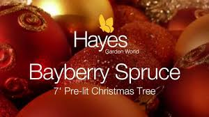 Pre Lit Pencil Christmas Tree 7 Ft by National Tree Bayberry Spruce 7 Ft Pre Lit Youtube