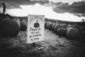 Pumpkin Patch Ct 2015 by A Trip To The Pumpkin Patch Life U0026 Thyme