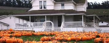 Peter Pumpkin Patch Petaluma by Halloween Fun In Wine Country Mayacama