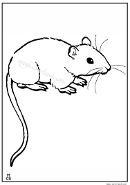 Rat Coloring Book Pages Animal