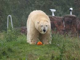 Rhinoceros Smashing Pumpkins Tab by Animals Get In The Halloween Spirit By Smashing Pumpkins