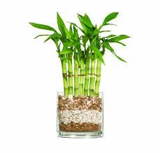 Plants In Bathroom Feng Shui by Feng Shui Bathroom Learn To Manage The Water Element