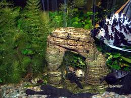 Spongebob Aquarium Decor Set by Types Of Decorations For Aquariums