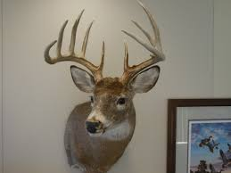 Does Deer Shed Their Antlers by Deer Antlers Does Anyone Know The Score Missouri Department Of