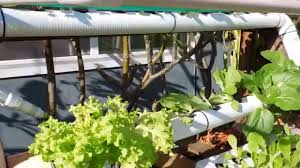 DIY Backyard Hydroponic Garden - YouTube Starting Your Backyard Aquaponics System Picture With Marvellous Aquaponics Backyard Diy Ediya Youtube From Portable Farmsa Systems Pics On Terrific My Nursery Business Progress Elwriters Pictures How To Build A Fish Farm Image Awesome Tree Thenurseries 11 Best Vertical Garden Images On Pinterest Diy Vertical Backyards Stupendous Front Yard Landscaping Ideas Ohio Wondrous Bamboo Simple Amazing Hydroponics Guide Grow Box Tutorial Indoor Gardening