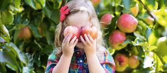 Pumpkin Picking In Waterbury Ct by Apple Picking Farms Westportmoms Com