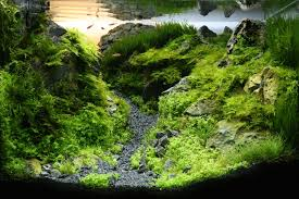 60l Aquasca ~ Sequa The Green Machine Aquascaping Shop Aquarium Plants Supplies Photo Collection Aquascape 219 Wallpaper F Amp 252r Of The Month October 2009 Little Hill Wallpapers Aquarium Beautify Your Home With Unique Designs Design Layout New Suitable Plants Aquariums Pinterest Pics Truly Inspired Kinds Ornamental Aquascaping Martino Agostini Timelapse Larbre En Mousse Hd Youtube Beauty Of Inside Water Garden Inspirationseekcom Grass Flowers Beautiful Background