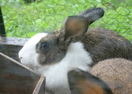 Pumpkin Pie Overnight Oats Rabbit Food by Meat Rabbits Archives They U0027re Not Our Goats