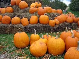 Pumpkin Picking Farm Long Island Ny by Top 6 Fall Activities On Long Island