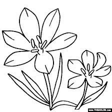 Crocus Flower Online Coloring Page
